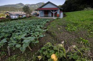 Täglich frisches Gemüse aus unserem Biogarten
